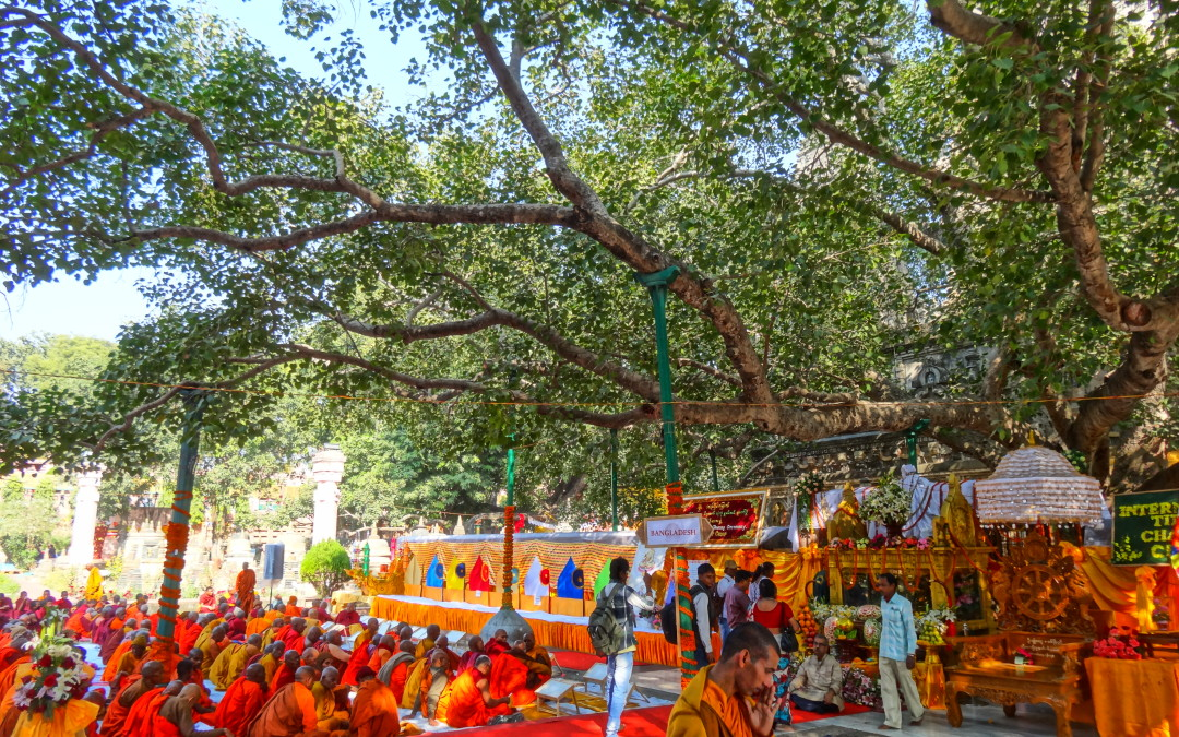 Bodhi Day! China, Korea, Japan, and Vietnam…