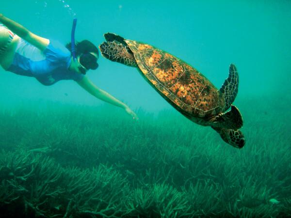 Work as a marine biologist in Australia